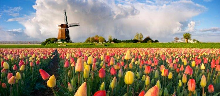 Голландский министр финансов призывает к регулированию ICO